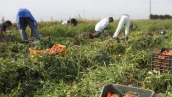 Italie: 200000 migrants régularisés pour pallier la pénurie de travailleurs dans l'agriculture